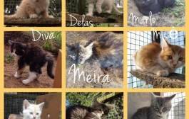Meira ir kačiukai