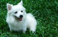 Skundėsi, kad gyventi trukdo savanorių priglausti beglobiai šunys