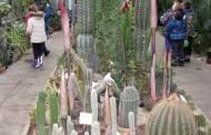 Darželinukų atradimai Botanikos sode