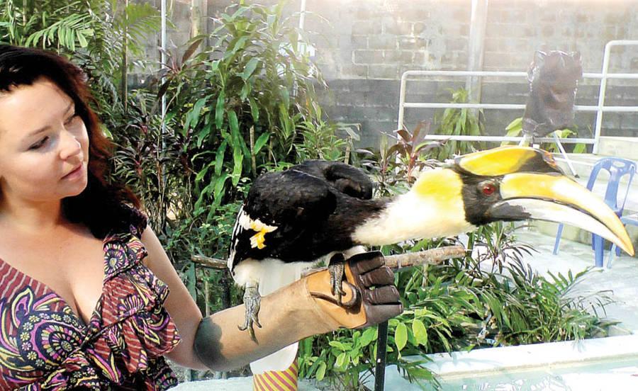 Australijoje daugybė margaspalvių paukščių.