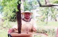 Bičių spiečių palaikė... gyvate