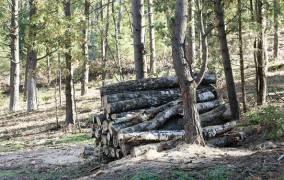 Miškų kirtimas ir sodinimas reglamentuojamas