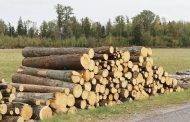 Ką daryti, jei privačiame miške vagys iškirto medžius ar pasisavino pagamintą medieną