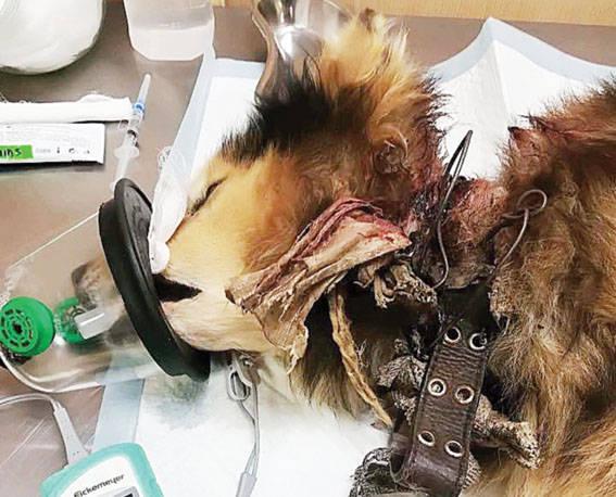 Iš Valų kaimo gelbėti neprižiūrimi, išsekę gyvūnai