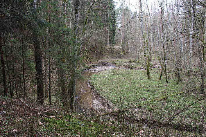 Miško upelyje aptiko prieštankinę miną