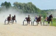 Hipodrome lenktyniavo žirgai