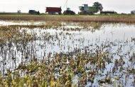 Nuo liūčių nukentėjusiems rajono ūkininkams skirta per 390 tūkst. Eur