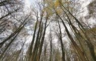 Valstybinių miškų urėdija bendradarbiaus su policija