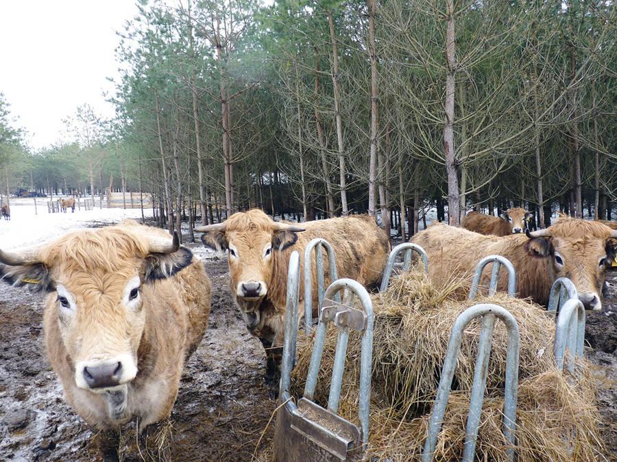 Ūkininkus pasieks susietoji parama