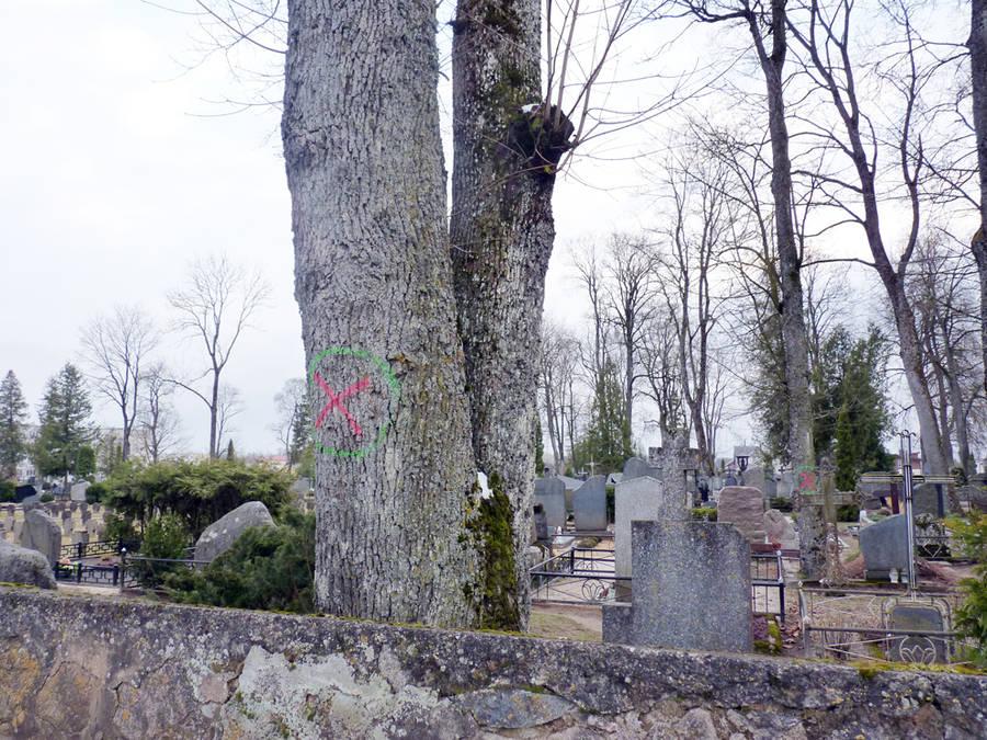 Ar reikia kapinėse medžių?